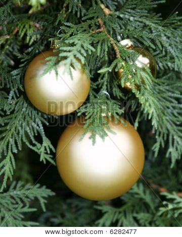 Christmas And Evergreen