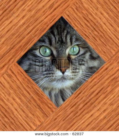 poster of pet cat behined fence.