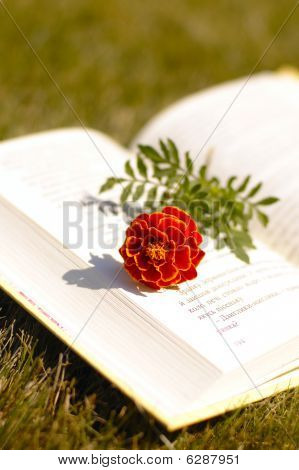 Book And Red Flower