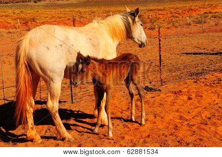 Image of a baby horse with his mother
