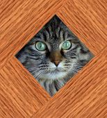pet cat behined fence. poster