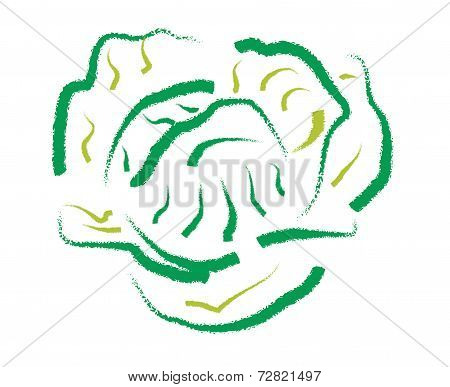 Hand Drawing Cabbage