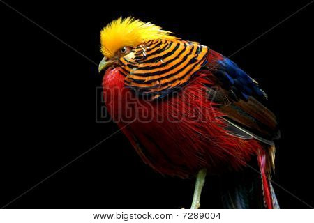 Multi Colored Bird