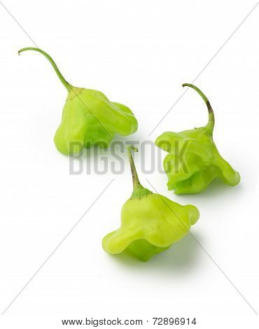 Green Bishop Crown Chili Peppers