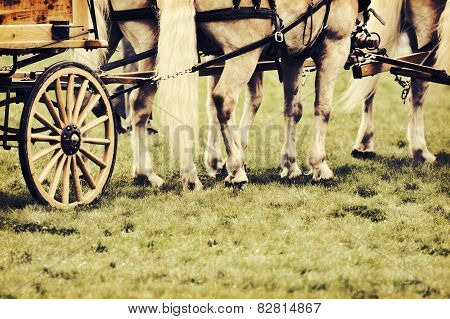 Horses Harnessed To A Wagon - Retro