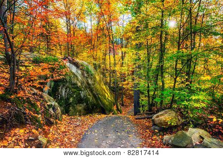 Rocky Path In An Autumn Forest