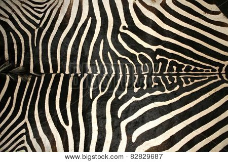 Macro Picture Of A Zebra Skin Texture As A  Background
