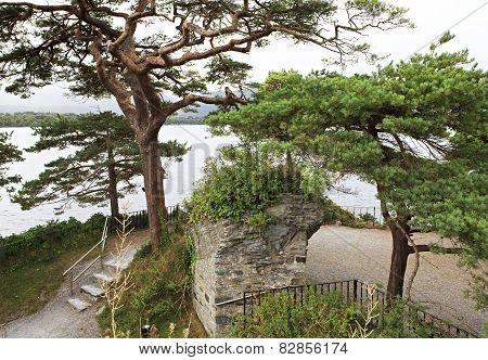 Large pine on Lough Leane Lower Lake.