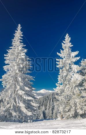 Winter landscape in mountains with fir