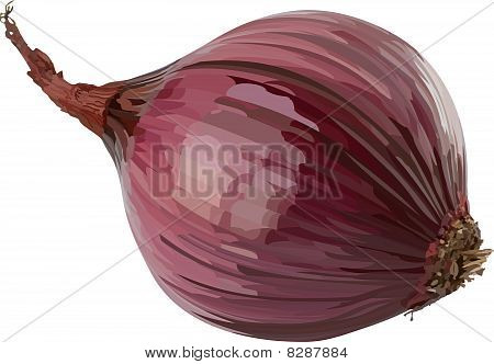 Vector red onion.