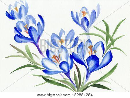 Watercolor Painting Of Crocus Flowers