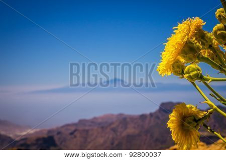 Yellow flowers growing on a plateau of Roque Nublo, with Tenerife and Mount Teide - its highest peak, visible in the distant background