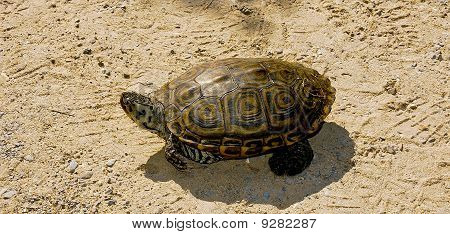 Turtle nesting at Jamaica Bay