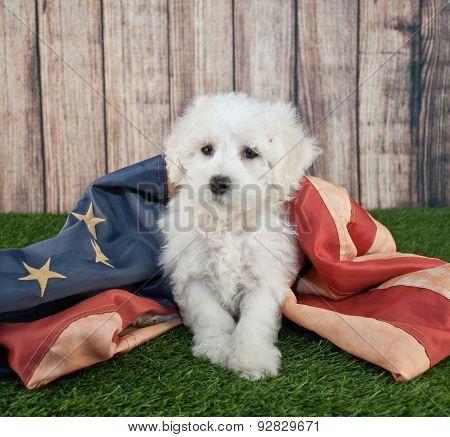 Patriotic Puppy