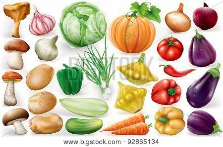 Set Of Vegetable