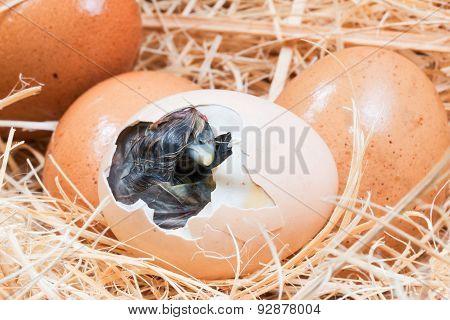 Newly born chick