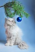New Year's picture - a branch with New Year's balls and a symbol of year 2011 white cat poster