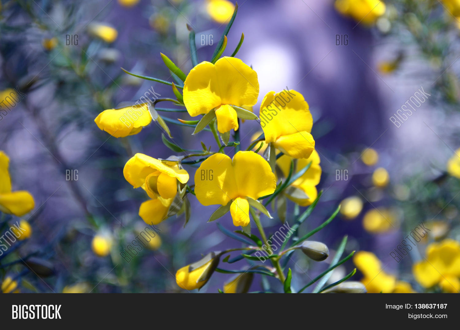Yellow Flowers Image Photo Free Trial Bigstock