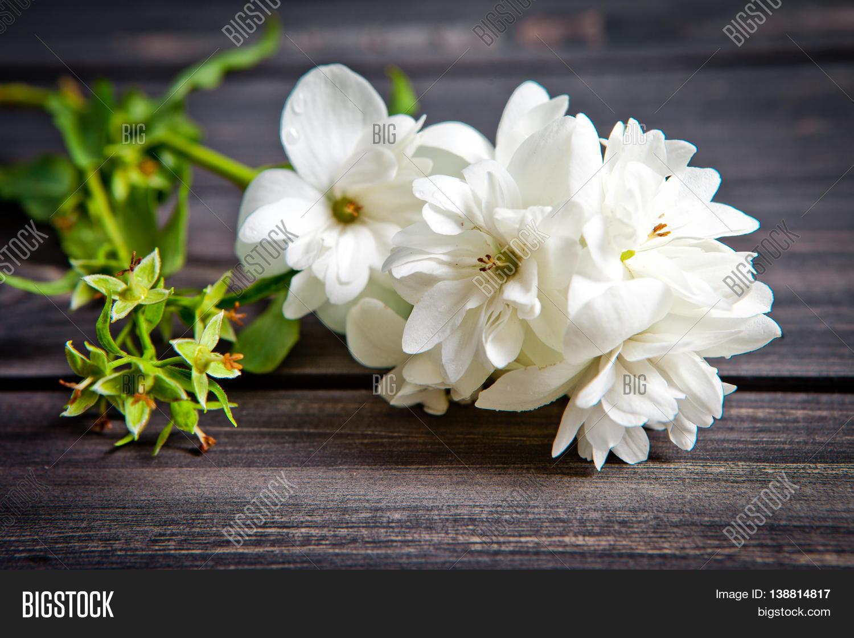 White flowers jasmine on wooden image photo bigstock white flowers of jasmine on wooden backgroundabian jasmine flowers izmirmasajfo