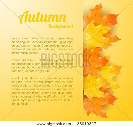 Autumn Background With Realistic Maple Leaves