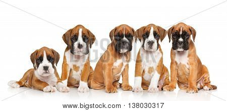 Five German Boxer Puppies On White
