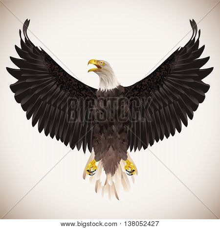Bald eagle isolated on white background. Vector illustration.