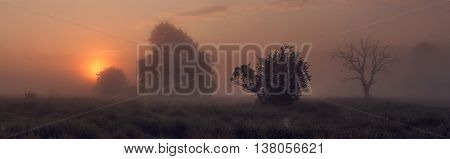 Foggy morning on meadow, colorful misty morning