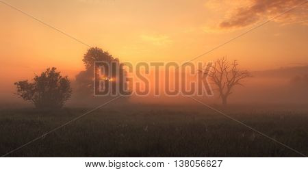 Misty sunrise on meadow, colorful foggy morning