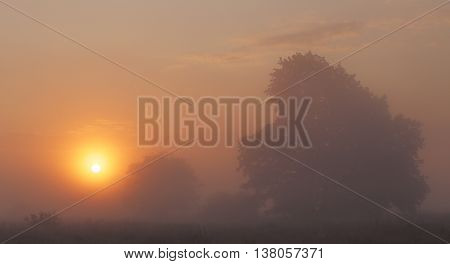 Foggy sunrise on the meadow, bright colorful summer sky