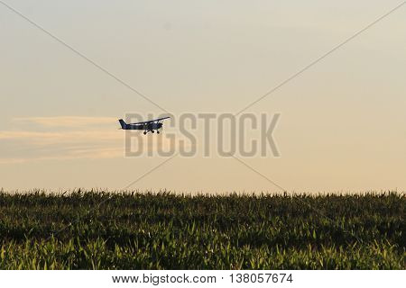 plane flies over a field of corn, fertilizing, spraying pesticides