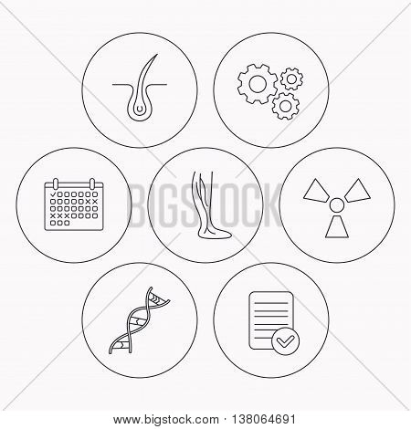 Phlebology, trichology and DNA icons. Radiology linear sign. Check file, calendar and cogwheel icons. Vector