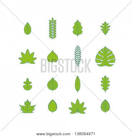 Vector various leaf icon collection.
