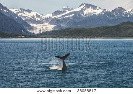 Baby Humpback Whale and Alaskan Landscape with Glacier in Background