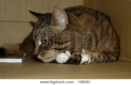 poster of cat with