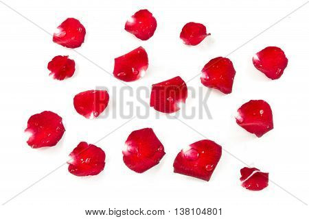 Red Rose Petels isolated on White background Classic style