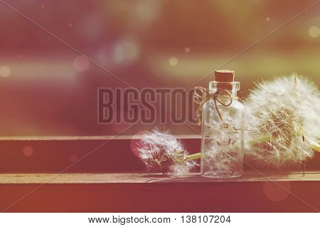 Summer background with dandelion on a wooden table a small bottle with seeds retro style effect