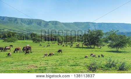 Farm Animals Grazing In A Field
