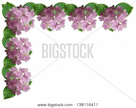 Beautiful floral background with pink hydrangea inflorescences