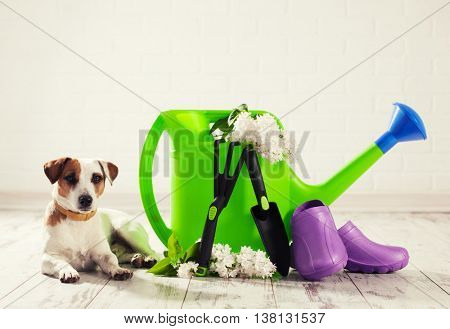 Garden accessories and dog. Watering can, shovel, rake for gardening
