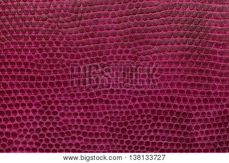 Bright magenta leather texture background. Closeup photo. Reptile skin. The skin of a crocodile or a snake