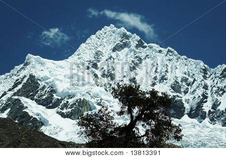 Alpamayo peak in Cordilleras mountain and tree silhouette