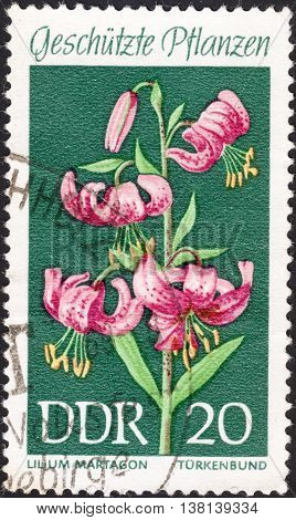 MOSCOW RUSSIA - DECEMBER 2015: a post stamp printed in the DDR shows a flower with the inscription