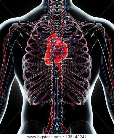 3D Illustration Of Human Internal System - Circulatory System.