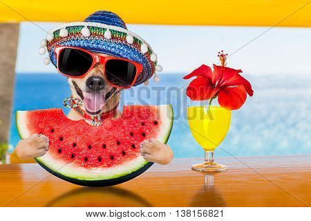 Dog At The Beach And Watermelon