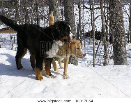 Furry friends in the winter