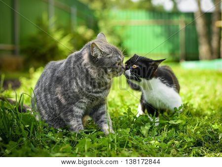 big cat and little kitten get acquainted