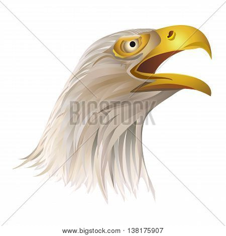 Head of bald eagle isolated on white background. Vector illustration.