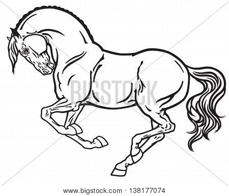 horse stallion in gallop. Side view outline black and white vector