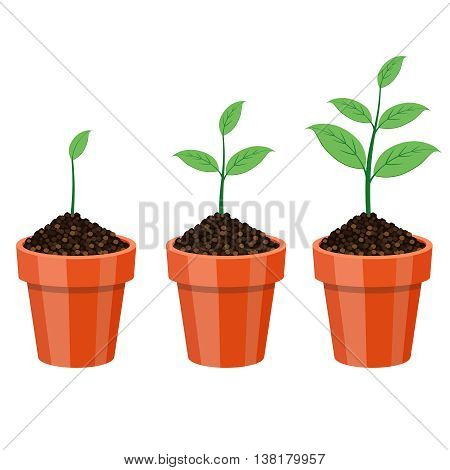 Plants Growing in the pot, from small to big.