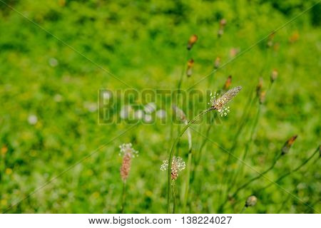 spring flower meadow in Germany in the evening